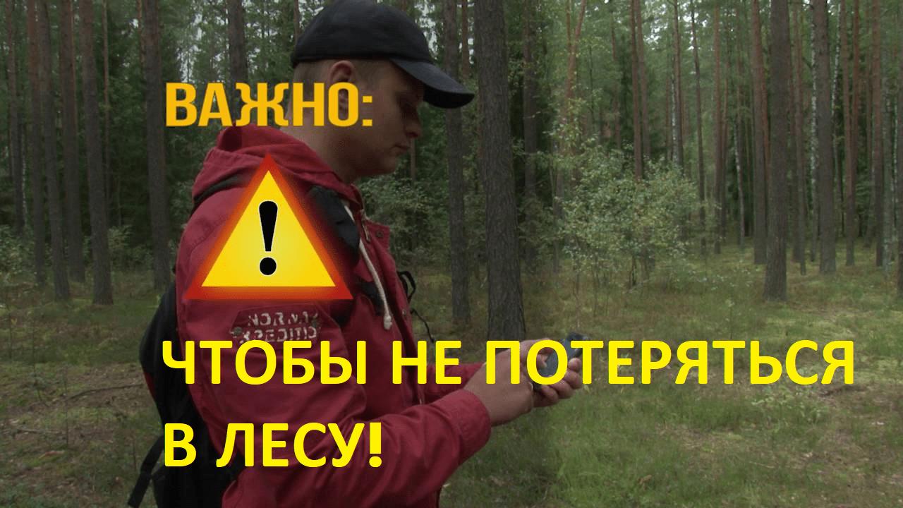 Потерялись в лесу